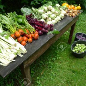 fresh vegetables from the garden, The Netherlands